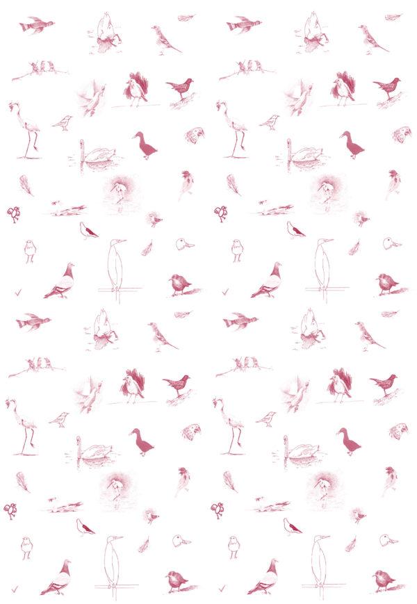 oiseaux-gris