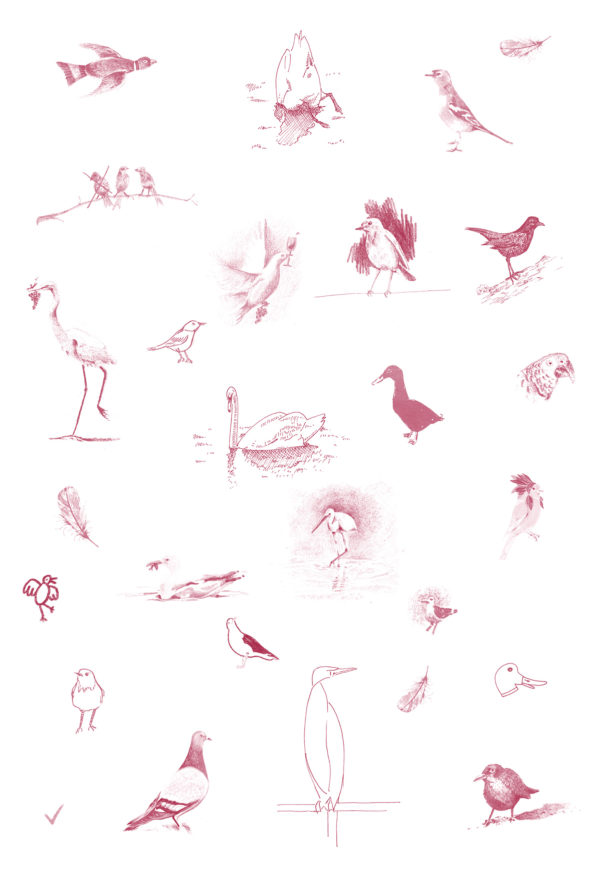 oiseaux-gris-zoom